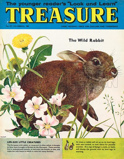 The Wild Rabbit.