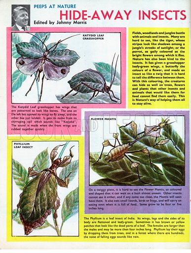 Hide-Away Insects.