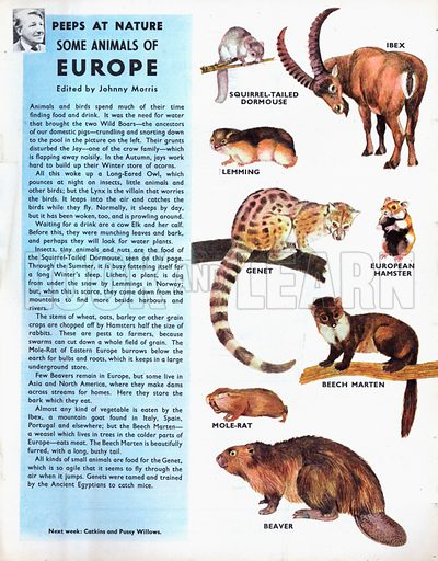 Some animals of Europe.