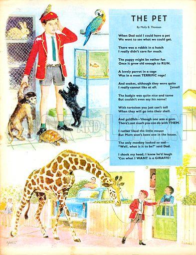 The Pet. Poem by Molly B. Thomas. Choosing a pet.
