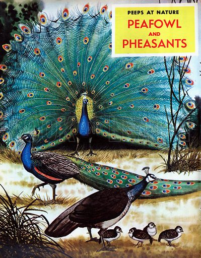 Peafowl and Pheasants.