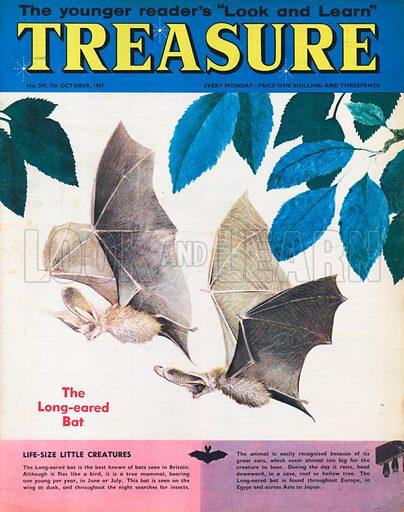 The Long-eared Bat.