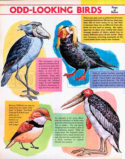 Odd-looking birds.
