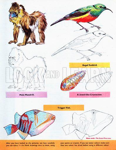 Rainbow Coloured Creatures.