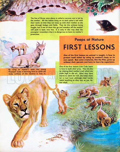 First Lessons for Young Animals.