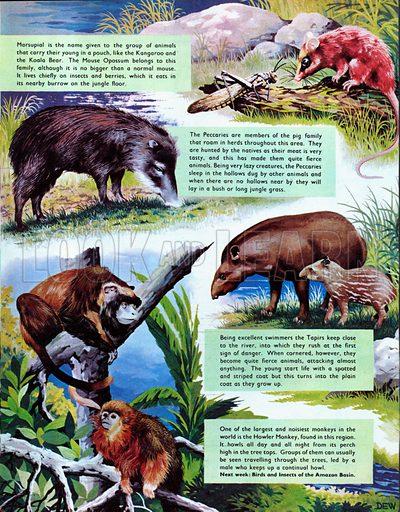 Animals of the Amazon Basin.