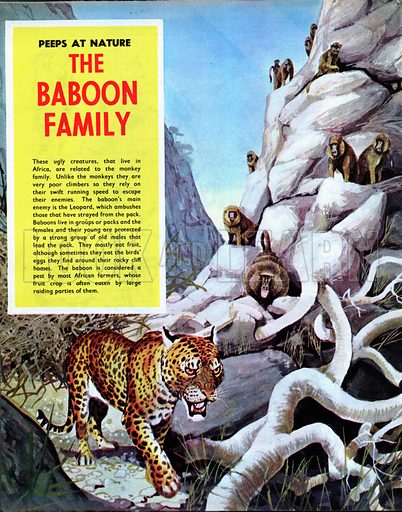 The Baboon Family.