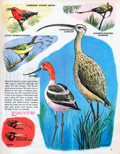 Curve-billed birds.