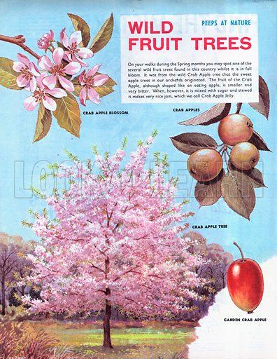 Wild Fruit Trees.