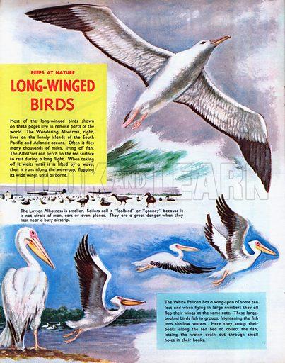 Long-winged birds.
