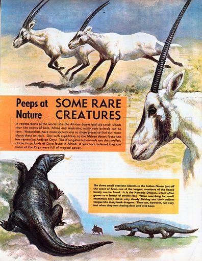 Some Rare Creatures.