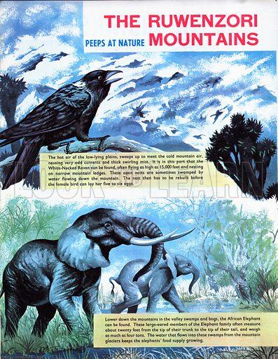 The Ruwenzori Mountains.