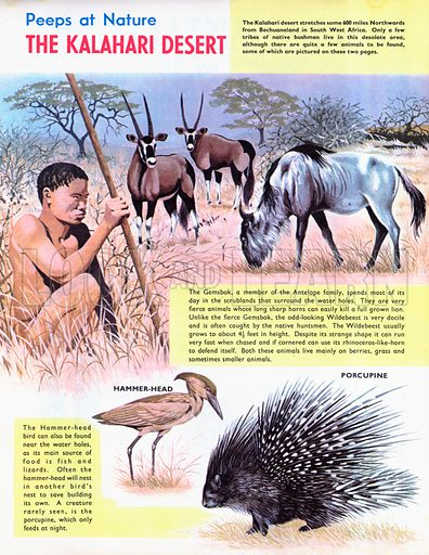 The Kalahari Desert.