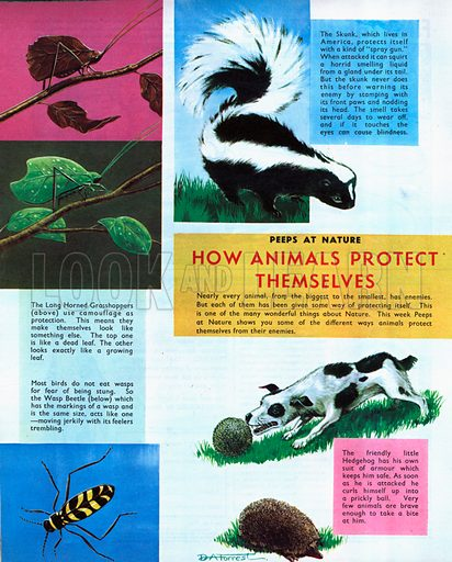 How animals protect themselves.