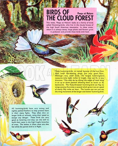 Birds of the Cloud Forest.