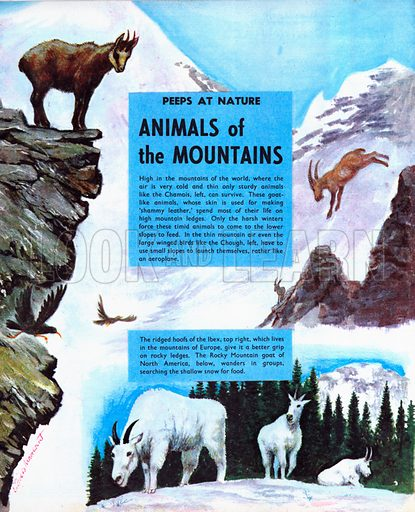 Animals of the Mountains.