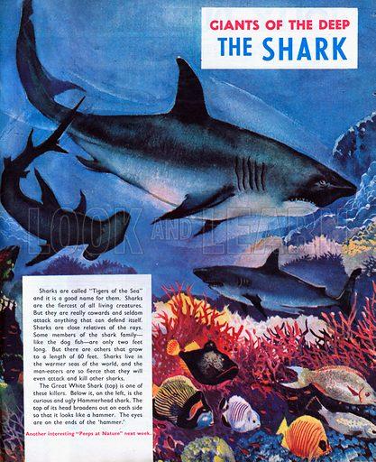 The Shark.