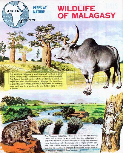 Wildlife of Madagascar (Malagasy).