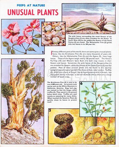 Unusual Plants.