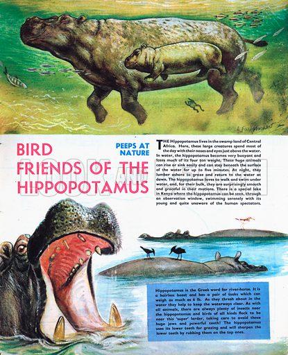 Bird Friends of the Hippopotamus.