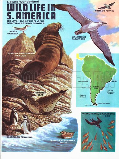Wildlife on the South-Eastern and South-Western coasts of South America.
