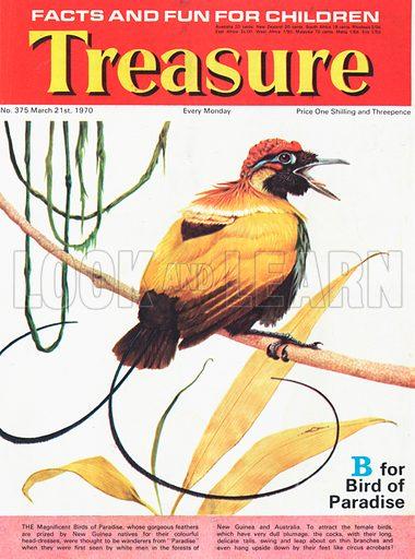 B for Bird of Paradise.
