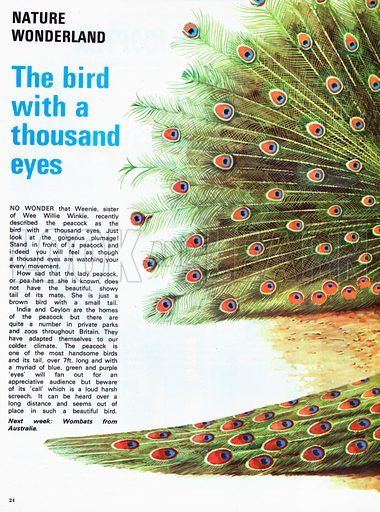 The bird with a thousand eyes.