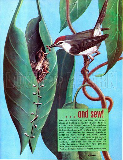 Birds which sew.