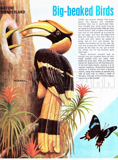 Big-beaked Birds.
