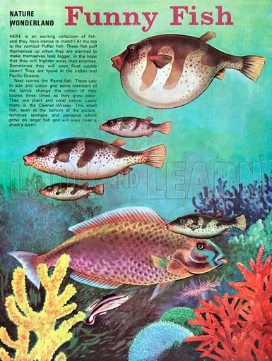 Funny fish, picture, image, illustration