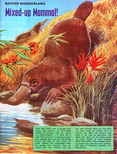 Mixed-up mammal.