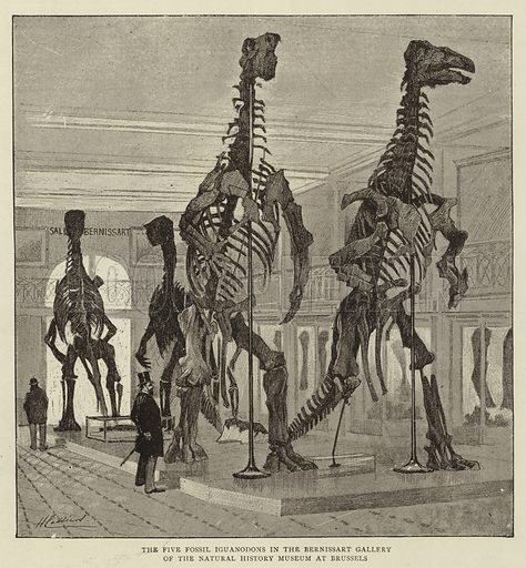 The Five Fossil Iguanodons in the Bernissart Gallery of the Natural History Museum at Brussels. Illustration for The Graphic, 5 September 1891.