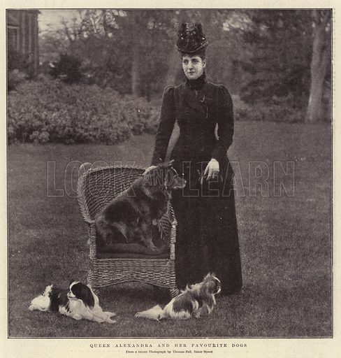 Queen Alexandra and her Favourite Dogs. Illustration for The Graphic, 16 February 1901.