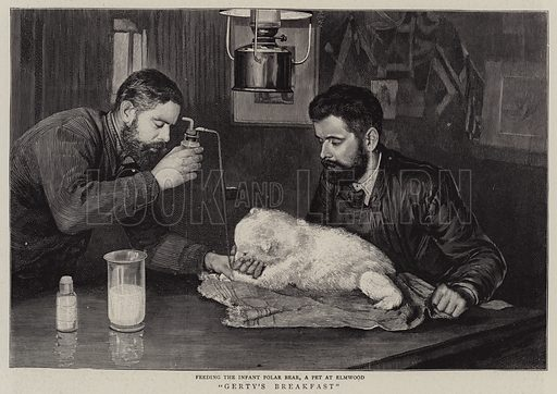 Gerty's Breakfast. Illustration for The Graphic, 11 September 1897.