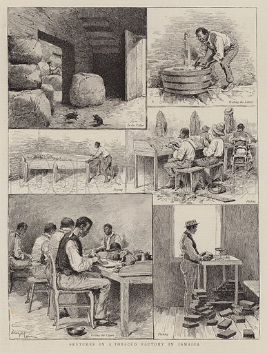 Sketches in a Tobacco Factory in Jamaica. Illustration for The Graphic, 24 August 1889.