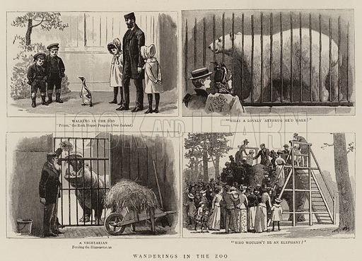 Wanderings in the Zoo. Illustration for The Graphic, 10 September 1892.