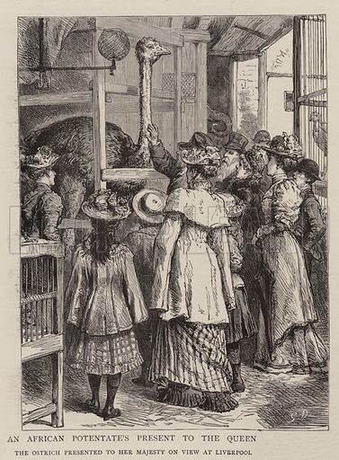 An African Potentate's Present to the Queen, the Ostrich presented to Her Majesty on View at Liverpool. Illustration for The Graphic, 15 October 1892.