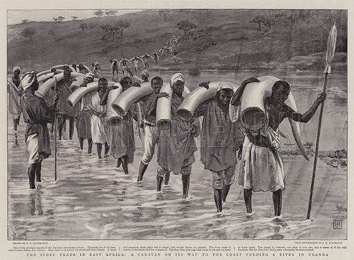 The Ivory Trade in East Africa, a Caravan on its Way to the Coast fording a River in Uganda. Illustration for The Graphic, 14 January 1899.