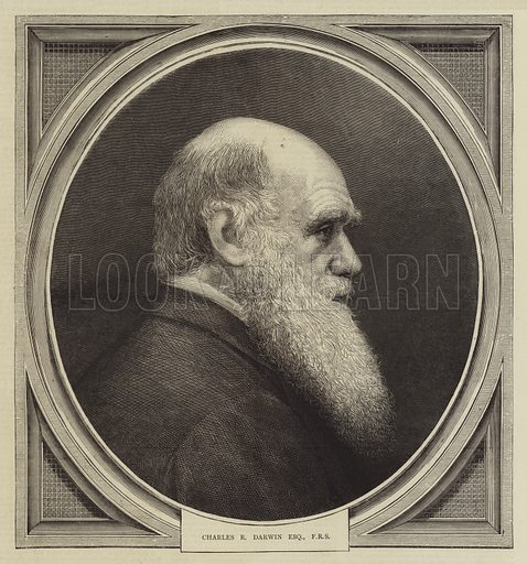 Charles R Darwin, Esquire, FRS. Illustration for The Graphic, 27 March 1875.
