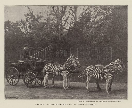 The Honourable Walter Rothschild and his Team of Zebras