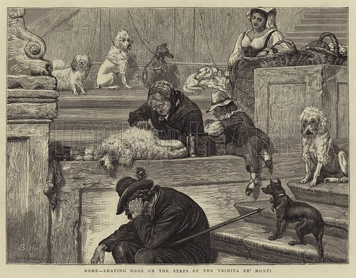 Rome, shaving Dogs on the Steps of the Trinita de' Monti. Illustration for The Graphic, 8 June 1872.