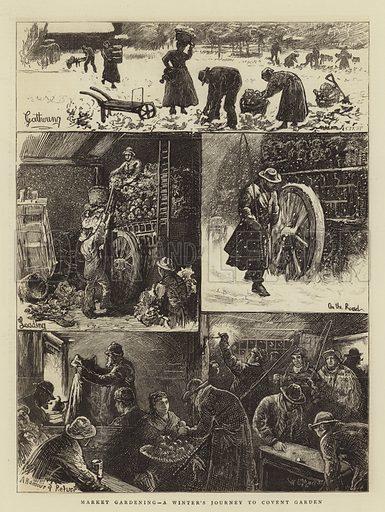 Market Gardening, a Winter's Journey to Covent Garden