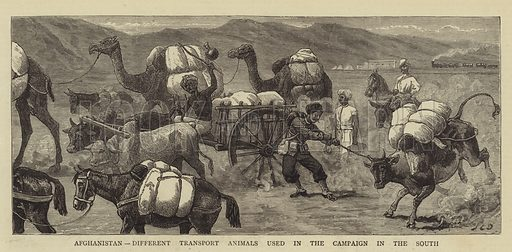 Afghanistan, Different Transport Animals used in the Campaign in the South. Illustration for The Graphic, 2 October 1880.