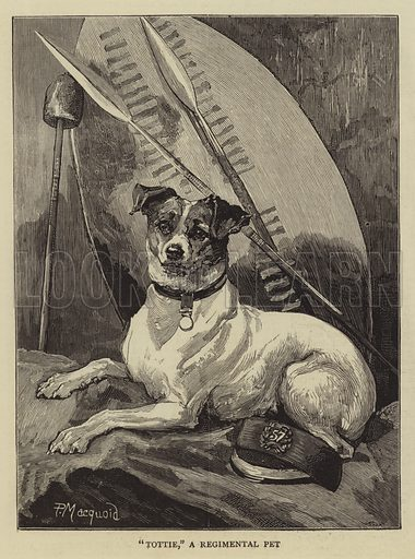 """Tottie"", a Regimental Pet. Illustration for The Graphic, 8 April 1882."