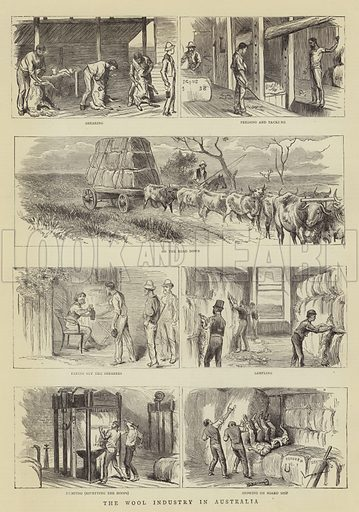 The Wool Industry in Australia. Illustration for The Graphic, 26 August 1882.
