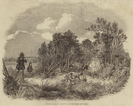 Pheasant-Shooting. Illustration for The Illustrated London News, 5 October 1850.