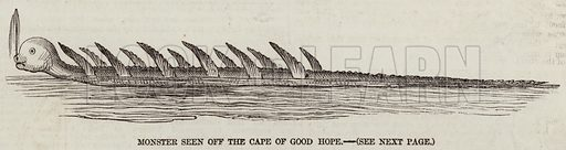 Monster seen off the Cape of Good Hope. Illustration for The Illustrated London News, 4 October 1856.