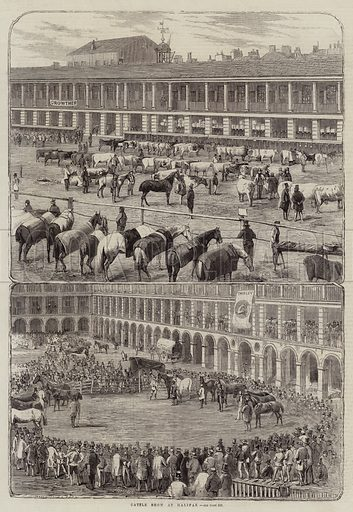 Cattle Show at Halifax. Illustration for The Illustrated London News, 10 September 1859.