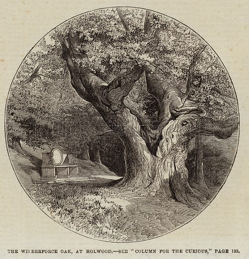 The Wilberforce Oak, at Holwood. Illustration for The Illustrated London News, 1 August 1863.