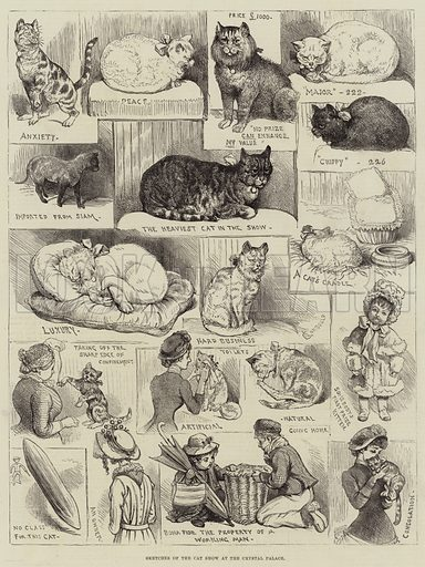 Sketches of the Cat Show at the Crystal Palace. Illustration for The Illustrated London News, 27 October 1883.